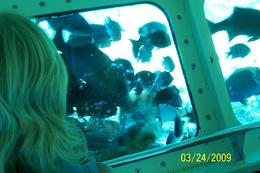 Photo of Cayman Islands Grand Cayman Seaworld Observatory - Shipwreck and Fish Feeding Show Viewing is great