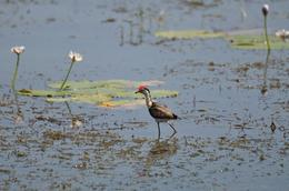 Photo of Darwin Kakadu, Nourlangie and Yellow Waters Tour with Optional Return Flight to Darwin Walk on Water