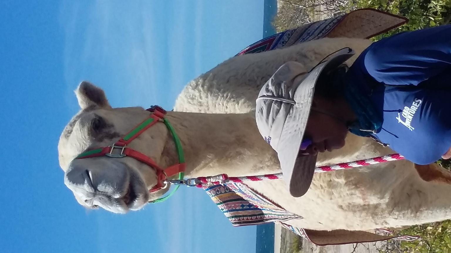 Camel Baja Outback Adventure from Los Cabos