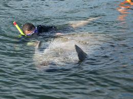 Photo of Orlando Swim with Manatees at Crystal River plus Everglades Airboat Adventure 1336