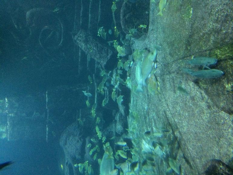 Visited Atlantis While On Vacation in Nassau Bahamas