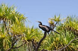 Photo of Darwin Kakadu, Nourlangie and Yellow Waters Tour with Optional Return Flight to Darwin Dart Bird