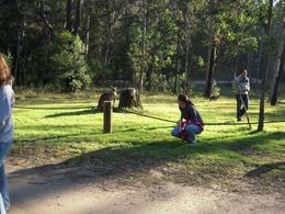 Photo of Sydney Blue Mountains Deluxe Small Group Eco Tour from Sydney Roos in the Park