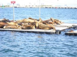 Seals on the seal tour!, Dani - December 2011
