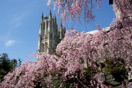 Photo of Washington DC Washington DC Hop-on Hop-off Trolley Tour The National Cathedral through the Blossoms