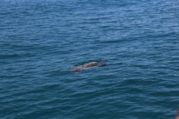 No whales but we did see a turtle. , Bruce F - December 2014