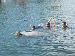 Photo of Orlando Swim with Manatees at Crystal River plus Everglades Airboat Adventure 1340
