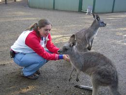 This was an excellent opportunity to mingle with all manner of Australian native animals in a very well-maintained sanctuary. - June 2009