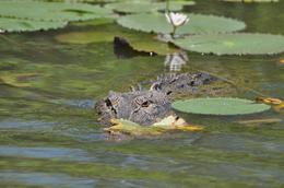 Photo of Darwin Kakadu, Nourlangie and Yellow Waters Tour with Optional Return Flight to Darwin Croc!