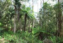 Photo of Melbourne Dandenongs