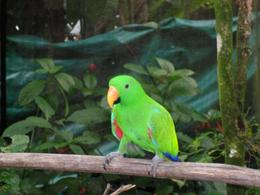 Parrot pic taken at Bird world, Brett C - March 2010