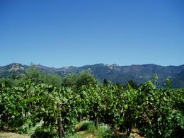 Photo of San Francisco Customizable Wine Country Tour from San Francisco Beautiful View
