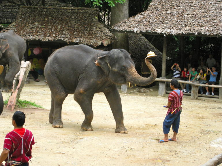 Elephant tricks - Chiang Mai