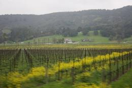 Photo of San Francisco Napa and Sonoma Wine Country Tour Vines