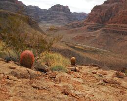Photo of Las Vegas Grand Canyon West Rim Deluxe Sunset Helicopter Tour walking and taking in the views