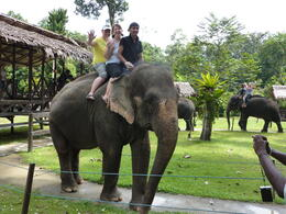 Photo of   Elephant ride - fun!