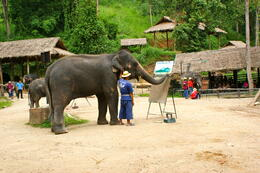 Photo of Chiang Mai Chiang Mai Elephants at Work Tour Elephant tricks