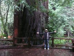 This is me! Standing in front of a giant redwood in a clearing, opposite a 900 year old slice of Redwood they have on one of the trails, Mark E - February 2010