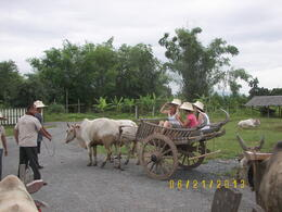 One of the 3 ox carts for our rides. , Linda D - July 2013