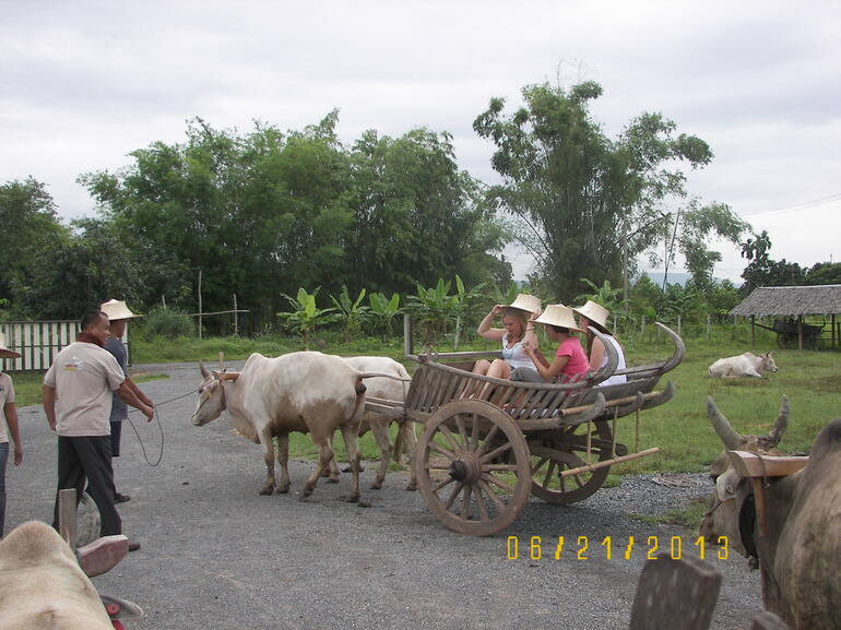 Ox Cart Ready to Go! - Bangkok