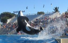 Shamu show at SeaWorld .By far the best place for pictures. , drealone - November 2013
