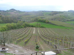Photo of Florence Tuscany in One Day Sightseeing Tour Tour of the vineyard