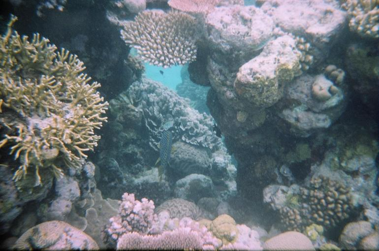 Coral at Agincourt Reef - Cairns & the Tropical North