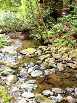 Photo of San Francisco San Francisco Super Saver: Muir Woods and Wine Country Tour Muir Woods