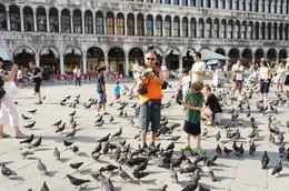 With all the pigeons! - September 2014