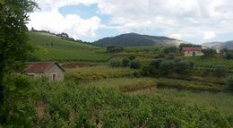 Vineyard at the Croft Winery, one of the oldest Port wineries in Portugal. , Kenneth N - June 2016