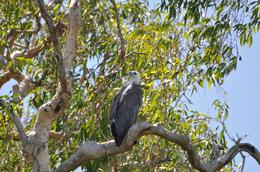 Photo of Darwin Kakadu, Nourlangie and Yellow Waters Tour with Optional Return Flight to Darwin Australian eagle