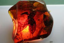 Photo of Puerto Plata Amber Museum (Museo de Ambar Dominicano)