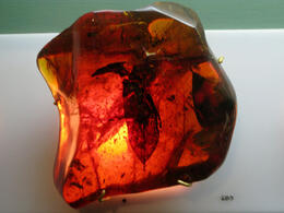 Photo of   Bug in amber, Amber Museum in Puerto Plata
