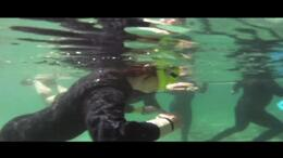 Dive into the crystal clear water off the coast of Florida and swim with Manatees! - July 2011
