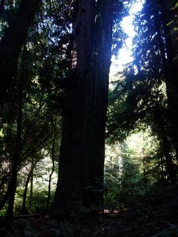 It was surprising just how tall the trees were., Wendy D - September 2007