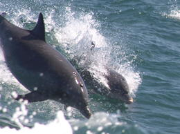 Photo of Perth Swim with Dolphins Day Trip from Perth 22-12-2012