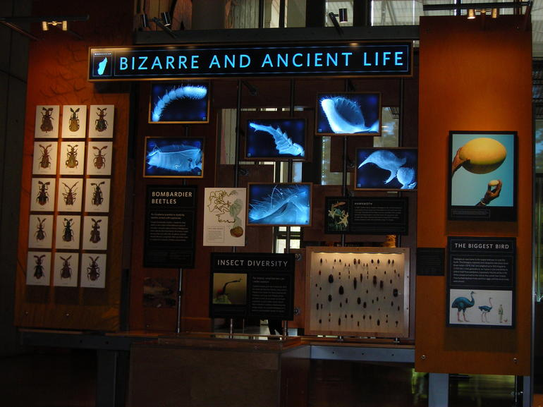 Bizarre and Ancient Life.JPG - San Francisco