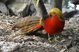 One of the many colourful birds seen at Featherdale Wildlife Park, Richard H - November 2009