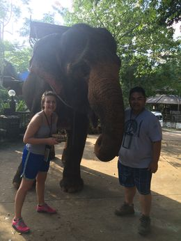 We were able to feed this giant and gentle creature at the end of the ride. , Daniel U - November 2015