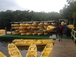 Photo of St Thomas St Thomas Mangrove Lagoon Kayak and Snorkel Tour Mangrove Lagoon