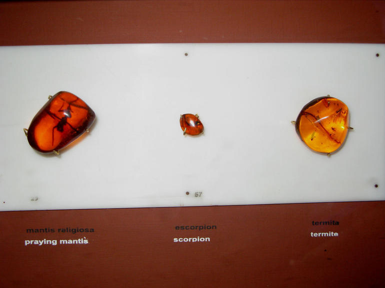 Praying Mantis, Scorpion and Termite in amber at Amber Museum - Puerto Plata