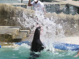 Photo of Puerto Plata Sea Lion Encounter at Ocean World There is a person in there!