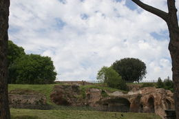 This is a photo of the Roman forum and some Roman pines. , Sharon M - May 2015