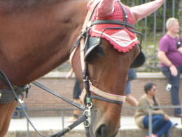 Horse waiting patiently for a customer outside the Coliseum , Maria A B - November 2014