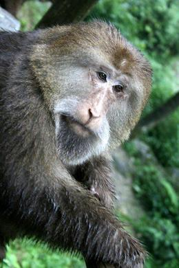 Getting up close to another monkey - June 2012