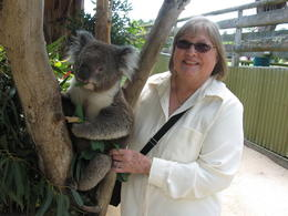Photo of Melbourne Phillip Island: Penguins, Koalas and Kangaroos Day Tour from Melbourne Koala