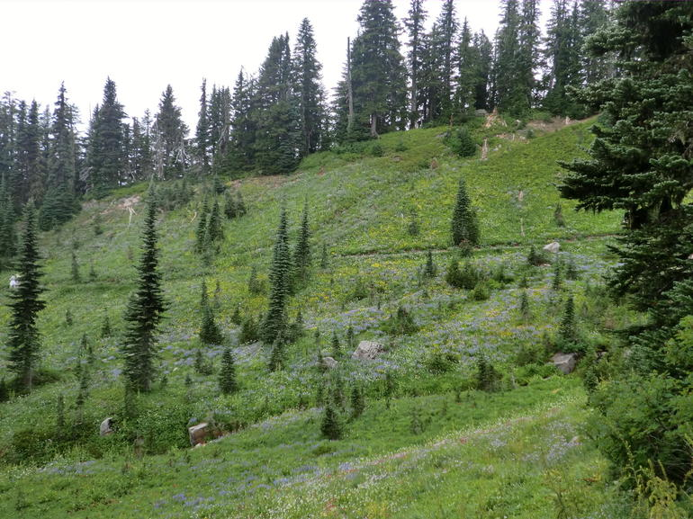 Mount Rainier national Park (5) - Seattle