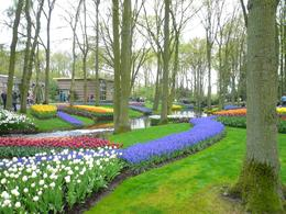 Photo of Amsterdam Keukenhof Gardens and Tulip Fields Tour from Amsterdam One of the many tulip beds, Keukenhof Gardens, Amsterdam