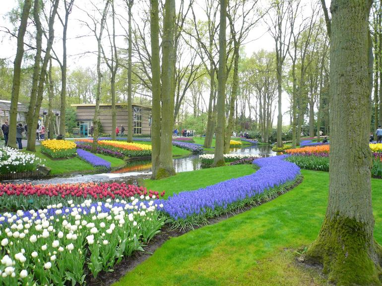 One of the many tulip beds, Keukenhof Gardens, Amsterdam - Amsterdam