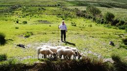 Photo of Killarney Full Day Tour of The Ring of Kerry Sheep Dog Demonstration